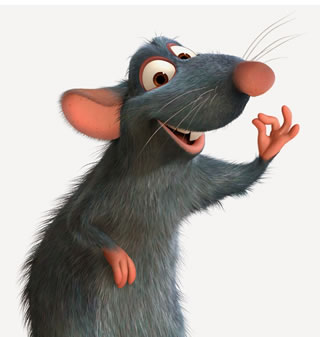 Ratas en el Sur de Argentina